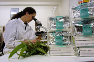 medical marijuana lab